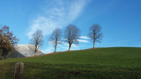 FOTKA - Letos asi naposledy na Ritzensee - Stromy