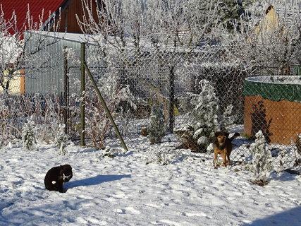 FOTKA - Divoch a Sany na sněhu