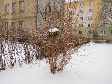 FOTKA - Začalo sněžit .....(2.1.)