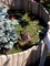 želvák Žofák