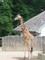 Žirafy4