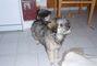 Nelinka-štěně