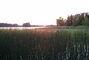 Ryd -  jezero