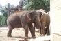 Milovaní sloni