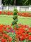 Upravený trávník u Buckinghamského paláce