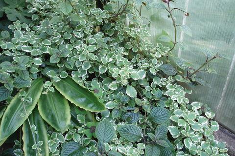 FOTKA - džungle ve skleníku