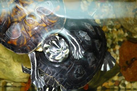 FOTKA - Moje želvičky