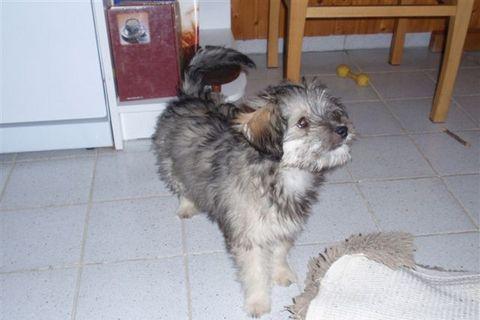 FOTKA - Nelinka-štěně