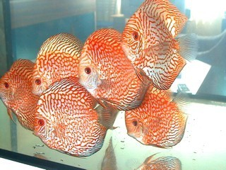 FOTKA - nase rybky