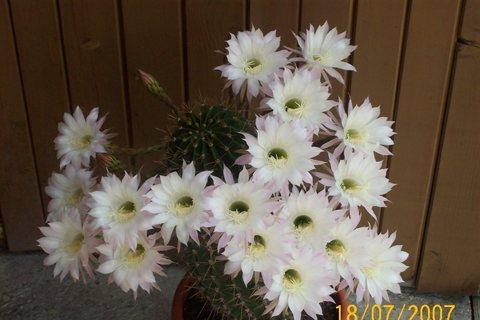 FOTKA - léto s květy