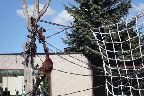 FOTKA - Opičí dráha