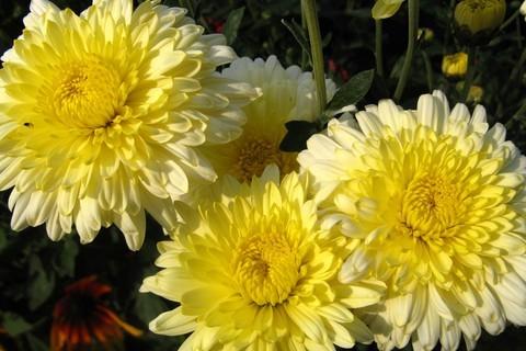 FOTKA - žluté listopadky