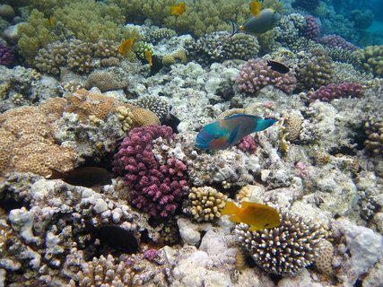 FOTKA - na korálech je živo