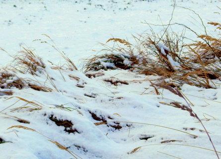 FOTKA - Trávy na mezích sníh nezakryl