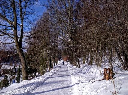 FOTKA - Pařez a cesta