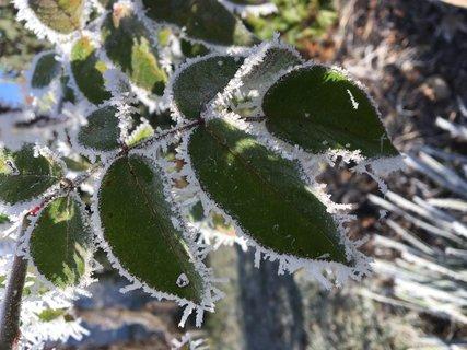 FOTKA - Zmrzlé listy