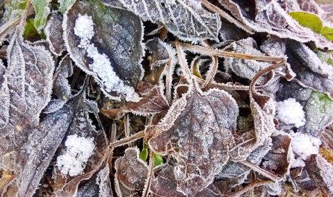 FOTKA - námraza na listech rudbekie