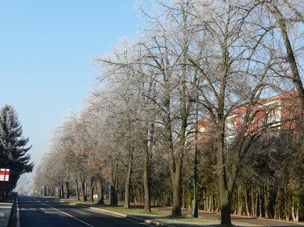 FOTKA - ojíněné lípy u silnice