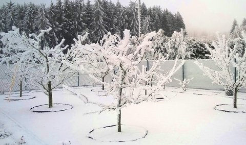 FOTKA - zamrzlá zahrada