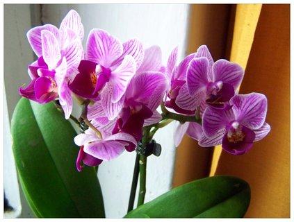 FOTKA - fialová orchidejka
