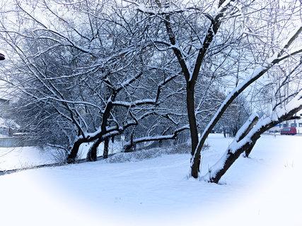 FOTKA - Zimní nálada.