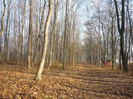 FOTKA - cesta v lesoparku