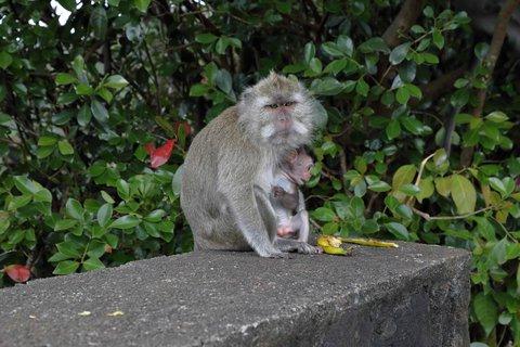 FOTKA - Máma s miminem