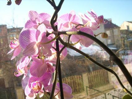 FOTKA - Orchidej pořád se otáčí tam, kam nechci