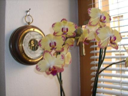 FOTKA - Jiná kamarádčina orchidej