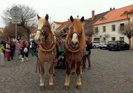 FOTKA - Krásní koně