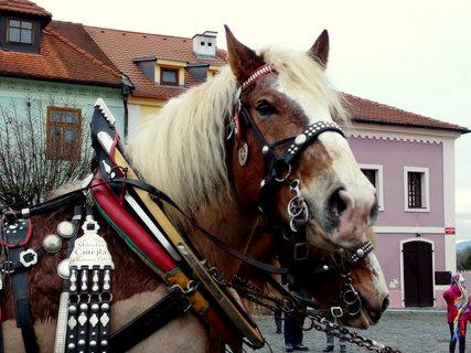 FOTKA - Já jsem koně obdivovala