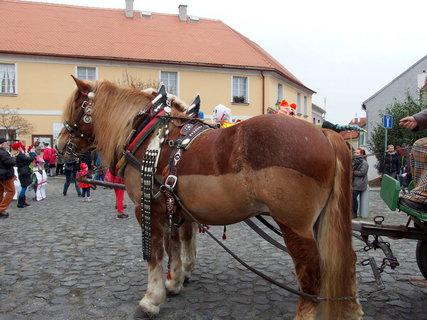FOTKA - Koně byli zvláštně vybarvení