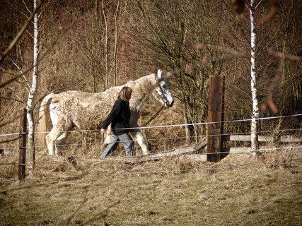 FOTKA - Někdo venčí pejska,někdo koníka!