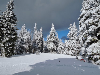 FOTKA - modrý a černý mrak a námraza na stromech