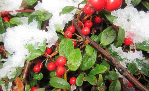 FOTKA - zbytky sněhu na skalce