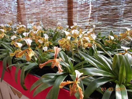 FOTKA - Orchidejky