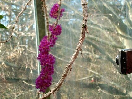 FOTKA - Je to vůbec orchidej?