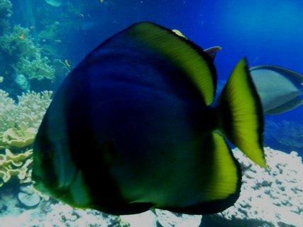 FOTKA - vzpomínka na mořské akvárium