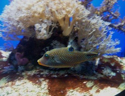 FOTKA - vzpomínka na mořské akvárium v Monaku