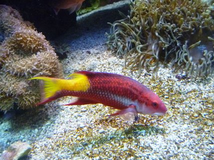 FOTKA - Vzpomínka na mořské akvárium v Monaku..rybka