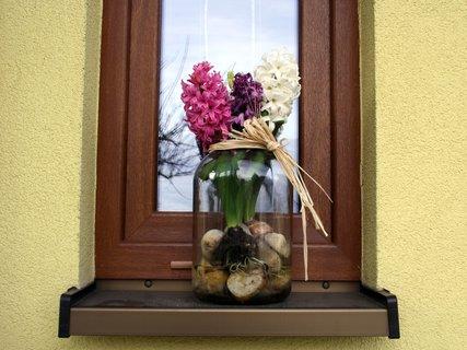 FOTKA - Hyacinty