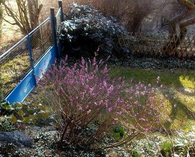 FOTKA - Už to začíná- včera na jedné zahradě