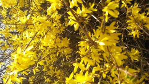 FOTKA - jarní zlato