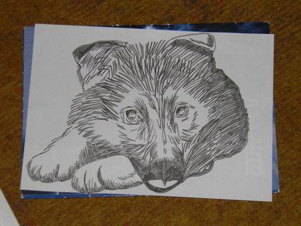FOTKA - kresba štěně