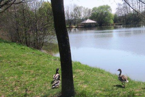 FOTKA - procházkou u rybníčku