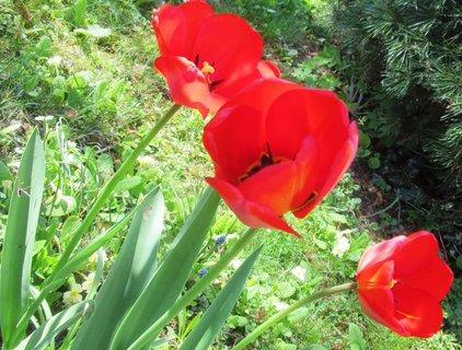 FOTKA - rudé na slunci