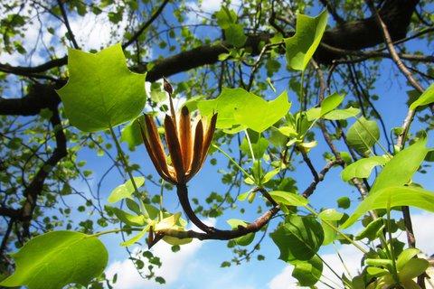 FOTKA - zbytek květu na stromě