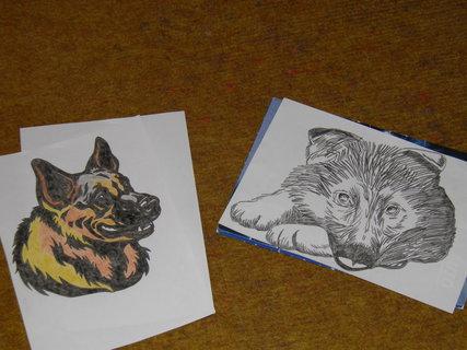 FOTKA - štěně a dospělý pes
