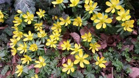 FOTKA - letos hodně kvetly