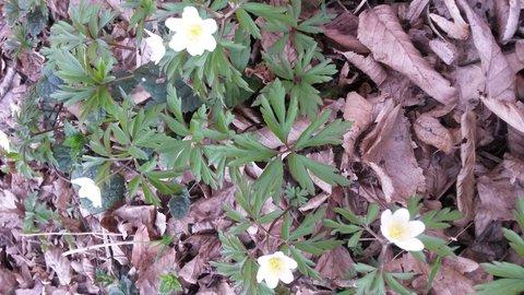 FOTKA - kvetou si v lesním klidu